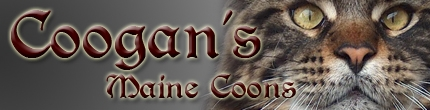 Coogan maine coon cattery