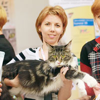 cats show maine coon