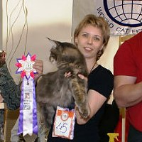 cats show in Kostroma