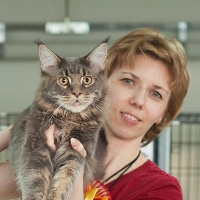 maine coon in cats show