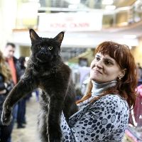 Cats show in Tver